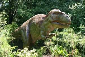 "Acrocanthosaurus (ak-ro-KAN-tho-SOR-us) or ""High-Spined Lizard"" was 4,400 pound meat-eater in North America."