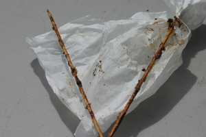 """Here is an alphabetical list of the foods """"on-a-stick"""" at the Wisconsin State Fair. These sticks are empty but plenty more at the Wisconsin State Fair are full of traditional and interesting foods. *Yes all of the following things are served on a stick!*"""