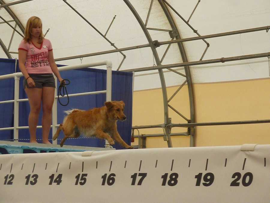 """The pool is """"portable"""" and can be set up at different venues or fairs."""
