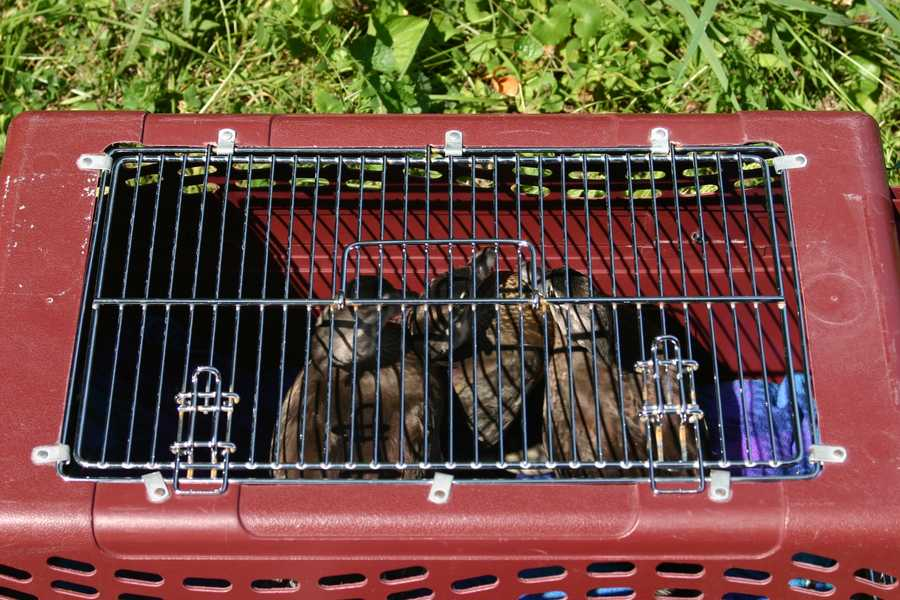 The ducks were transported from the Wisconsin Humane Society Wildlife Rehabilitation Center following their rehab and as we found out were eager to spread their wings.