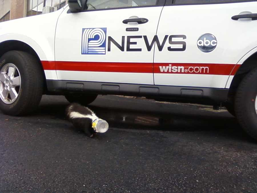 WISN 12 received a call Wednesday morning from Notre Dame Middle School officials stating that a skunk had a jar stuck on its head.