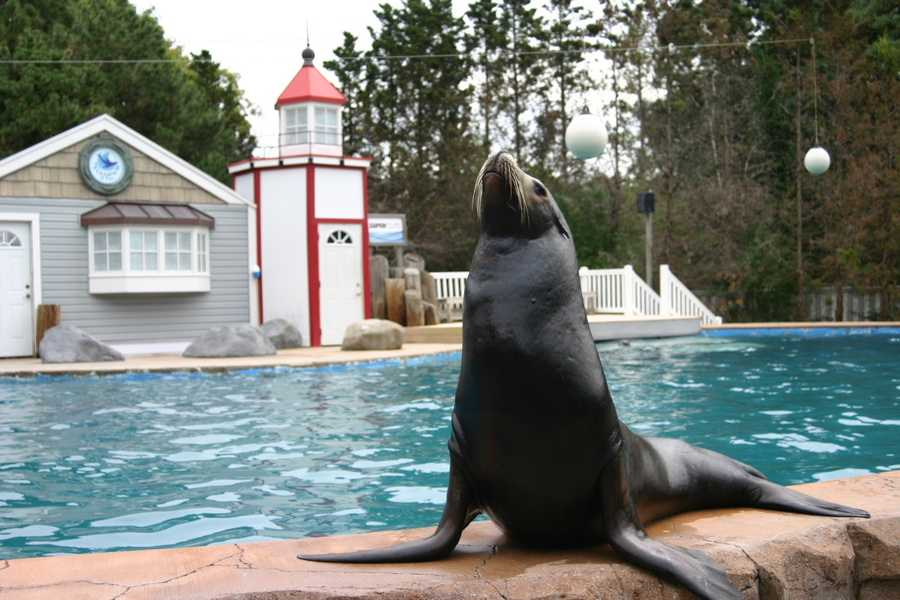 Since Colby didn't seem interested in entertaining the assembled media, other seals and sea lions decided to fill that roll.