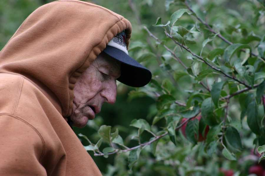 Kenneth Weston has been working in this orchard since 1936 and says he has never seen a season this bad.