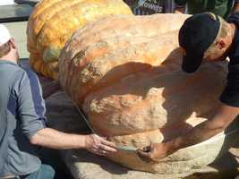 This pumpkin was being measured for the giant pumpkin competition.