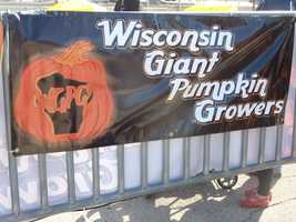 The Wisconsin Giant Pumpkin Growers has many giant pumpkins on display.
