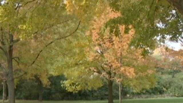Summer drought may have helped fall colors
