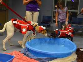 The dogs at the Wisconsin Humane Society had their own Halloween party -- Halloween Howl.