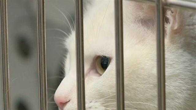 Racine shelter reopens as Humane Society