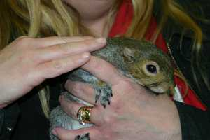 All of the Twiggys have been orphaned or are rescue squirrels.