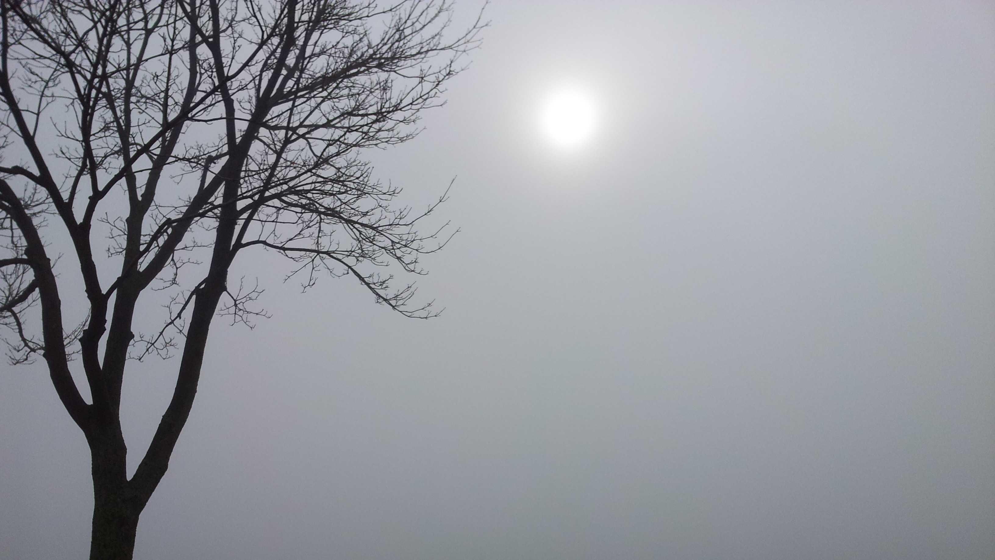 1-29 fog