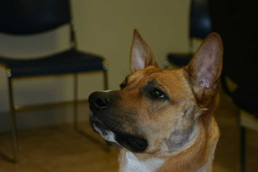Currently there are more than a dozen dogs available at the Racine Campus.