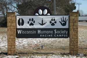 For more information about Jerome or any of the animals available at the Wisconsin Humane Society click here.