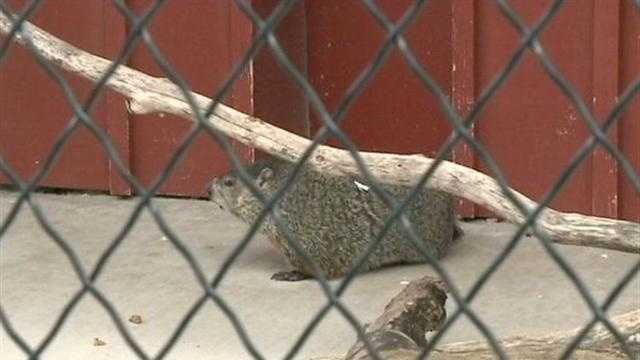 Local residents gave mixed reactions to Wynter's Groundhog Day prediction.