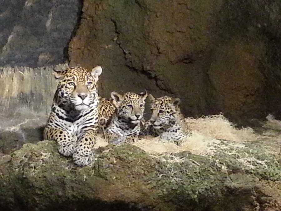 Click here to follow the Milwaukee County Zoo on Facebook.