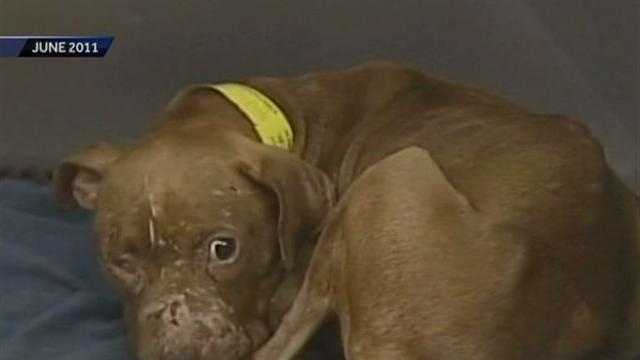WISN 12 News investigates incarcerated dogs rescued from dog-fighting rings