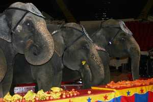 All guests are invited to Circus Pre-Party one hour before show times.