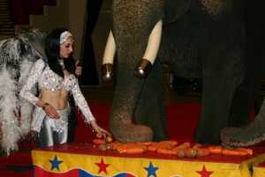 """Before the circus opens the weekend run, the public was invited to """"Lunch with the Elephants""""."""