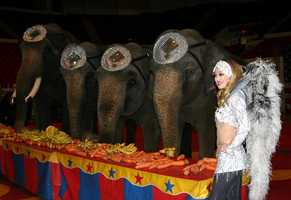 This was a chance for people to get up close with one of the most familiar acts at the circus.