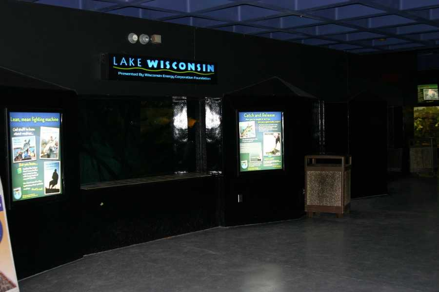 In the Aquatic & Reptile Center you can go above it all to see Lake Wisconsin froma new vantage point. Here you'll see some of the most popular Wisconsin fish.
