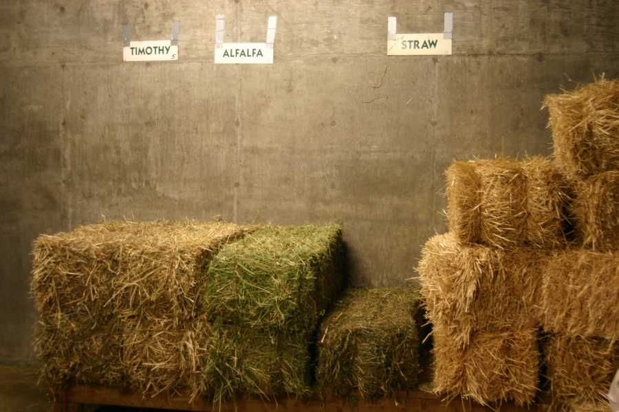 Timothy Hay, Alfalfa and straw are among the staples here.