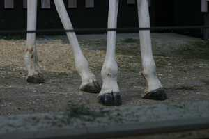 Did you know that the floor is specially designed to help wear down the giraffes ever growing hooves.