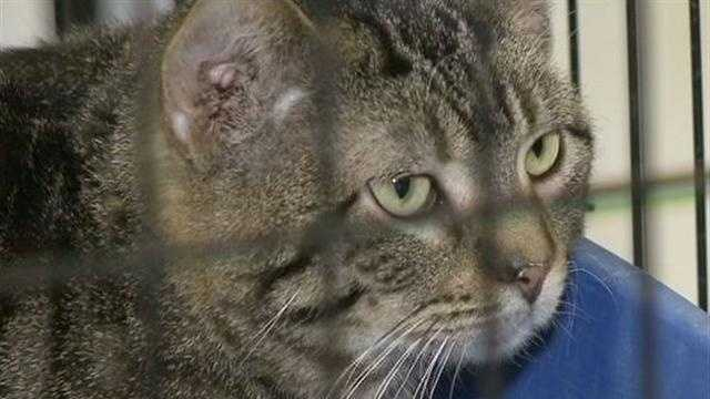 Authorities took dozens of cats to be treated after they were rescued in the Town of Oconomowoc.