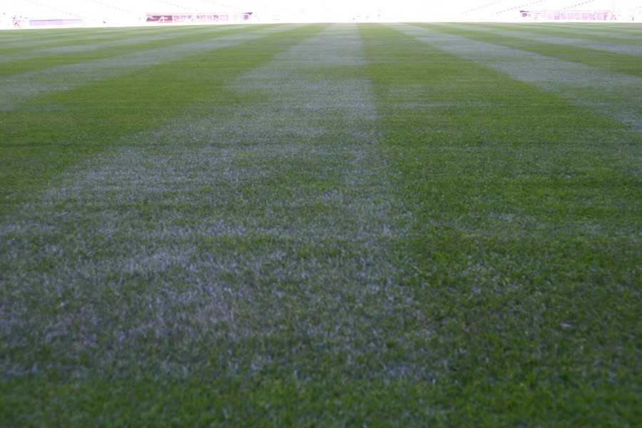 The grass is ready.