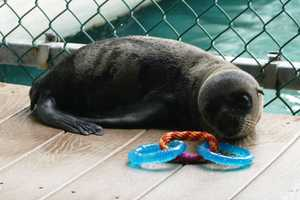 Meet Talise!  She is a California sea lion, born at the Milwaukee County Zoo on April 17, 2013.