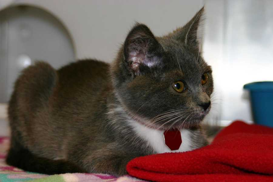 Click here to see a list of all cats that are available for adoption at the Ozaukee campus.