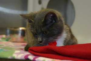 Click here to see a list of all cats that are available for adoption at the Racine campus.