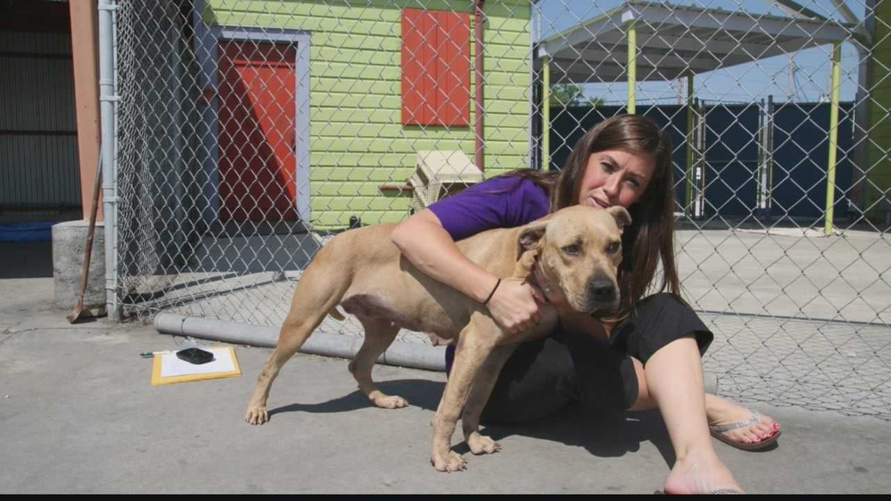 Pewaukee woman helped rescue animals after hurricane Katrina and other disasters.