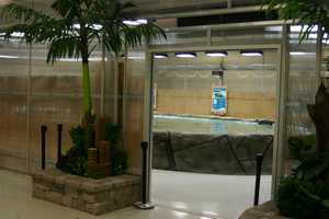Inside this special exhibit you will be able to touch and at time feed the stingrays.