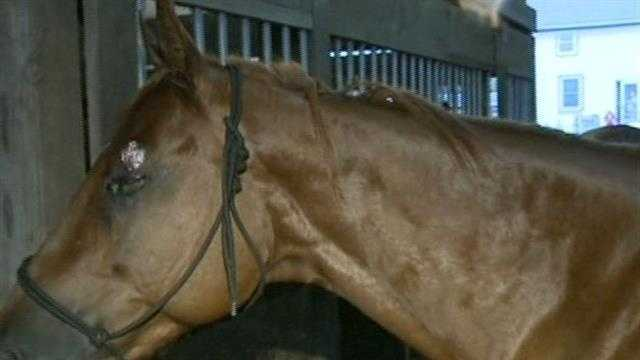 Two people were hurt when lightning struck the horses they were riding on a trail in the Kettle Moraine State Forest.