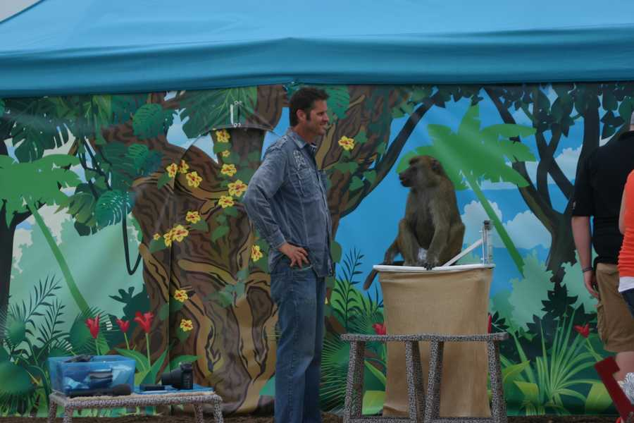 """""""Wild about Monkeys"""" is an interactive animal exhibition that features trained baboons. Shows take place daily at 12:30, 2:30 and5:30 pm, followed by an hour of playtime after each show."""