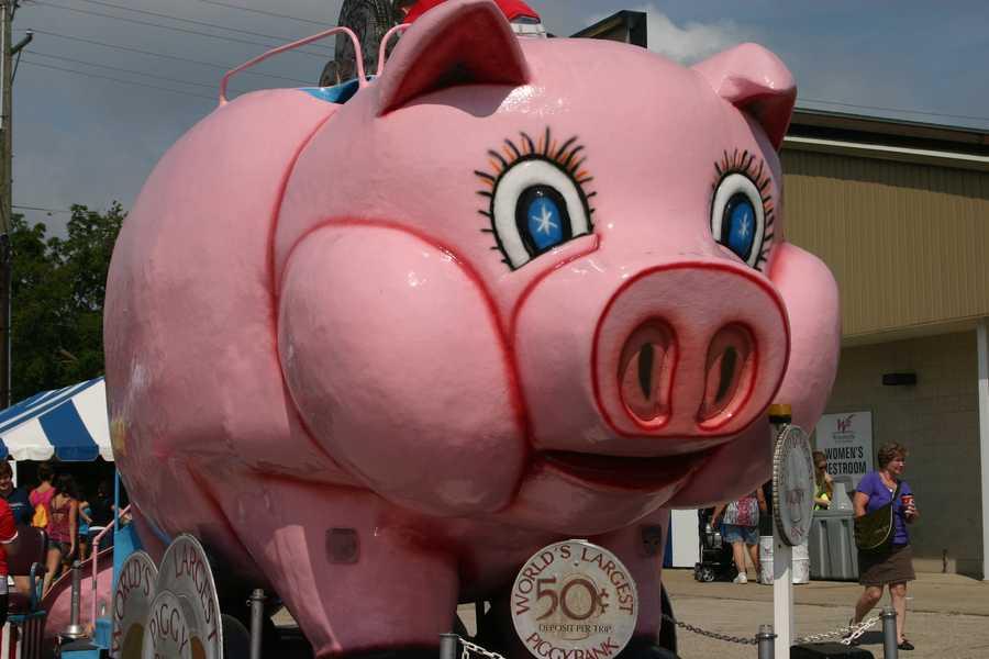 Giant piggy bank slide.
