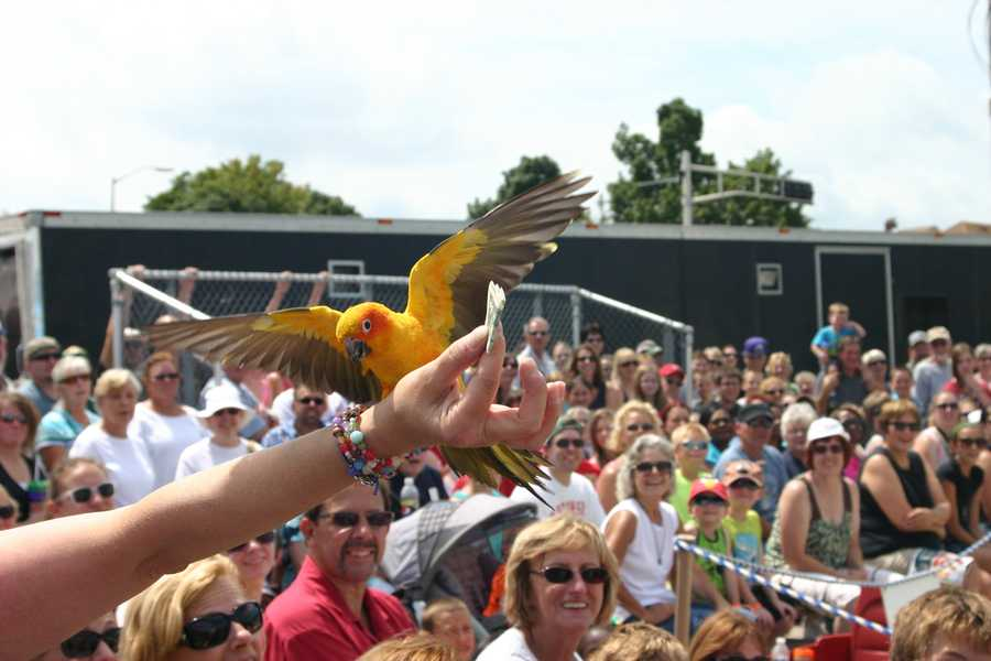 The bird flew into the crowd and retrieved the dollar.