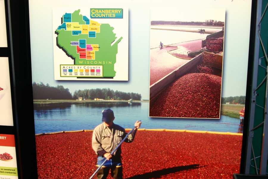 Cranberries are the largest fruit crop in Wisconsin.  Look at all the counties on the map that produce cranberries.