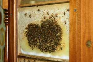 Check out a live bee hive.