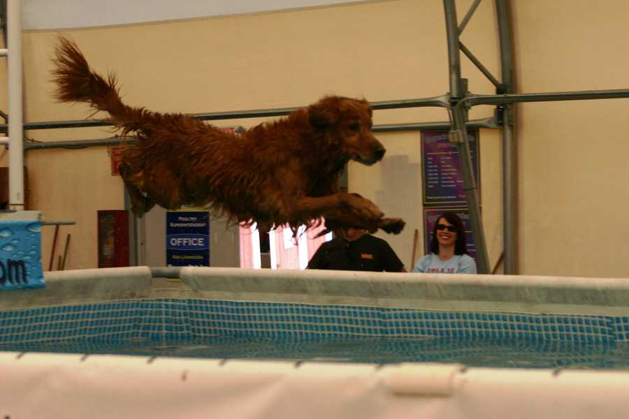 Each dog jumps once then the jumping order is repeated.