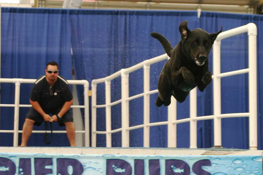 Hosted by Pier Pups, the popular dog jumping competition has returned to State Fair Park.