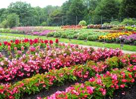 Services include Children's Education, Family Events, Adult classes and various special events. Volunteers can serve as Garden Docent, Office support, or in the group's Outreach activities outside the gardens.