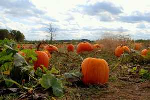 We asked... and you told us! Here are the top places to go for picking your own pumpkins. Thanks to our WISN 12 News Facebook fans for creating this list!