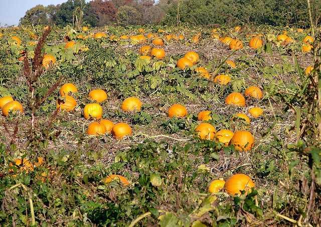 Smith Pumpkin Farm -7150 18th St, Kenosha