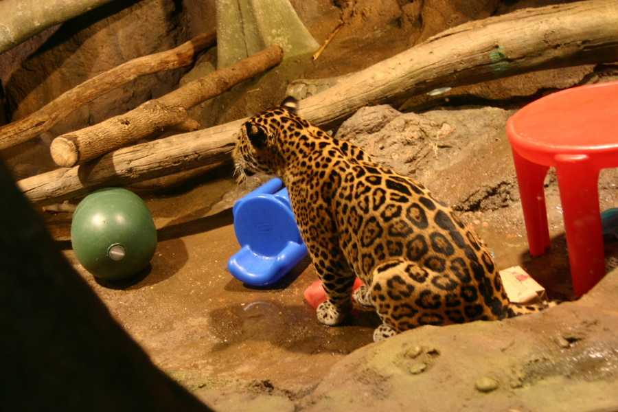 B'alam checks on his brother's activities before returning to his own treats.
