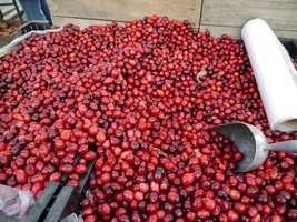 12 oz. fresh cranberries -$2.30.  Down from $2.51 last year.