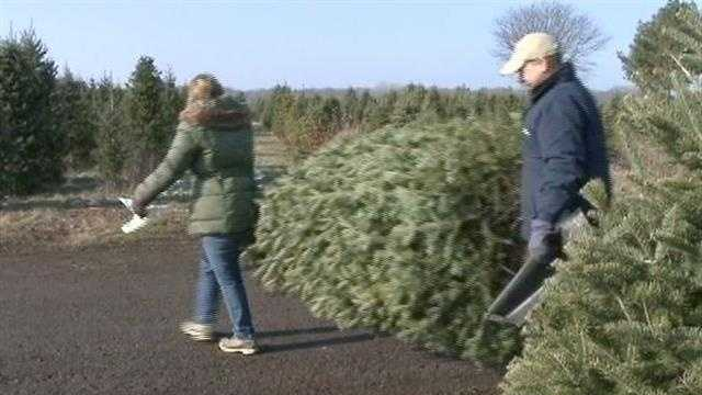With Thanksgiving falling later on the calendar this year, Christmas tree farms have been bustling with customers this weekend.