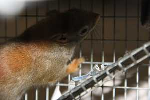 Red squirrels are good climbers and jumpers.