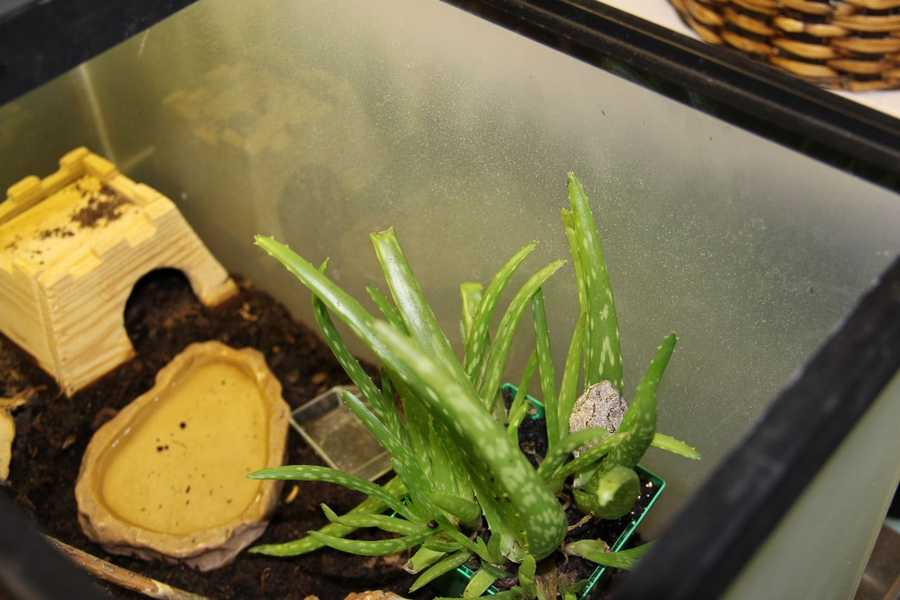 Can you find the grey tree frog? He spends a lot of his time in the aloe plant.