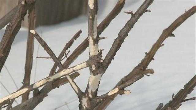 Harsh winter tough on plants and landscaping