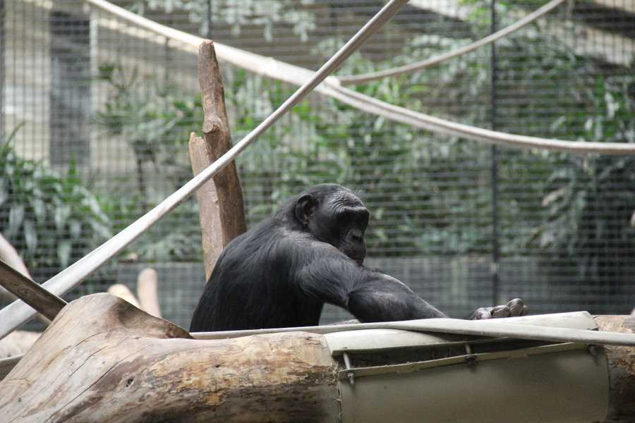 For more information about the Milwaukee County Zoo, including hours and admission rates, click here.